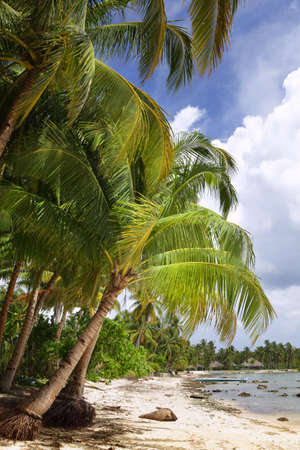 Tropical budget tourism quiet non-explored Asian beach bordered  by lush coconut palm trees on the Mindanao, Philippines island on the Pacific ocean side of Siargao.