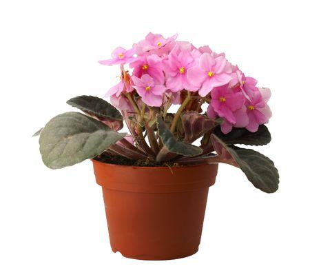 flower in pot photo