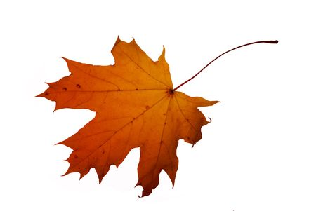 descriptive: autumn leaf isolated on white background