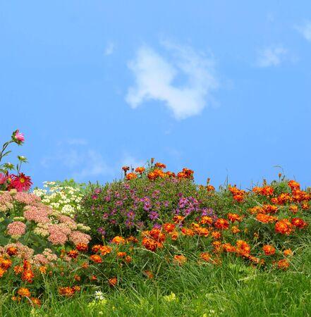 grass and flowers                Фото со стока