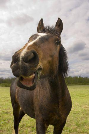 horse laugh: fun horse