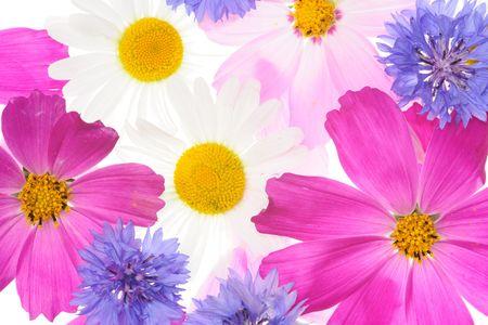floral pattern Фото со стока