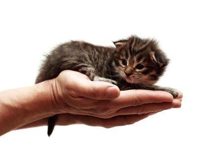 small kitten on a hand photo