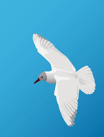 seagull Иллюстрация