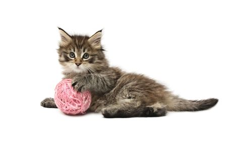 cats playing: kitten playing with pink ball Stock Photo