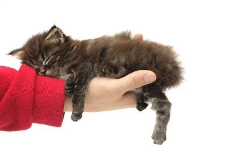 small kitten sleeping on a hand against white background photo
