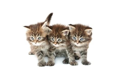 three kittens against white background