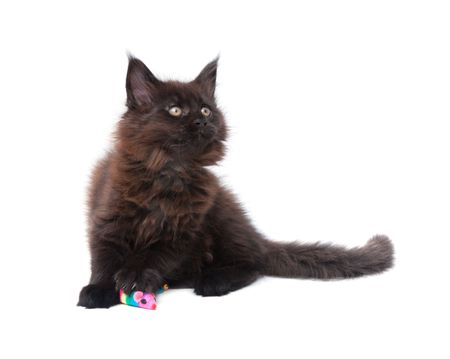 small kitten with cat-toy against white background photo