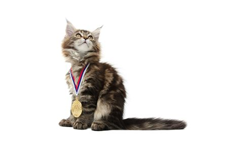 small kitten with gold medal against white background photo