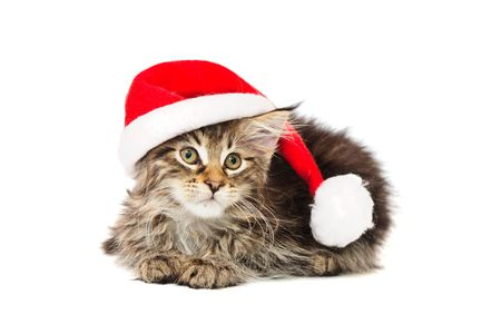 kitten in red hat against white background Фото со стока