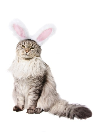 Cat in a suit of a rabbit isolated on white background Stock Photo - 7824712