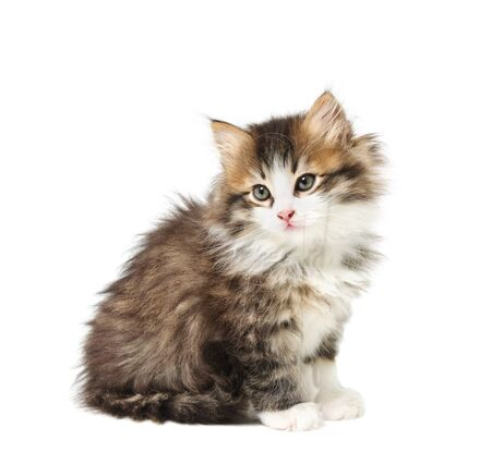 Small tabby fluffy  kitten isolated on white background Stock Photo - 8394729