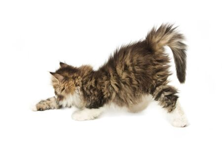 Stretching tabby fluffy  kitten isolated on white background Stock Photo - 9458244
