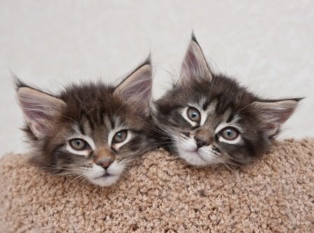 kittens: Two small kittens
