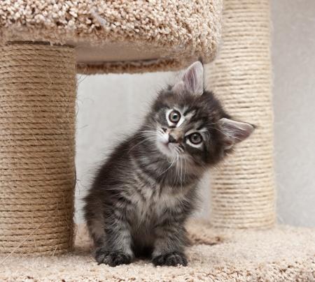 Small kitten looking a camera