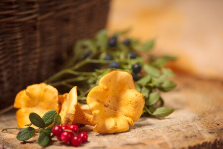 chanterelle: Blueberries, cranberries and chanterelle to background basket Stock Photo