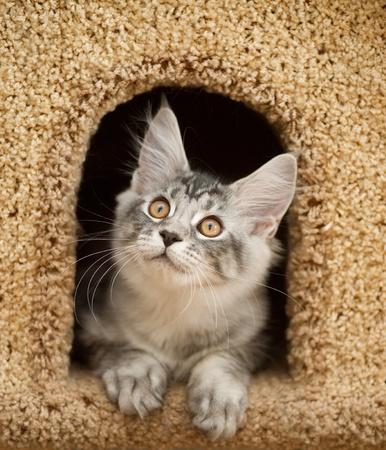 kitten peeking out of the house photo