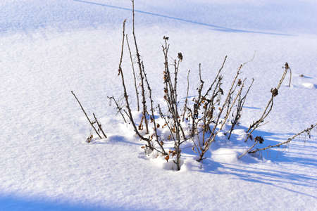 Snowy landscape with tree branches in the garden