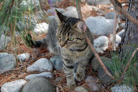 exploring: Cat exploring the nature