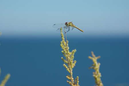 libélula en el mar Foto de archivo - 12221243