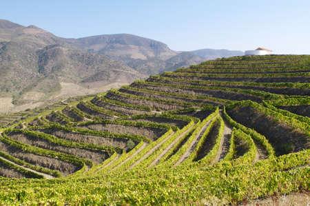 gradas: terrazas de la regi�n vin�cola del Douro