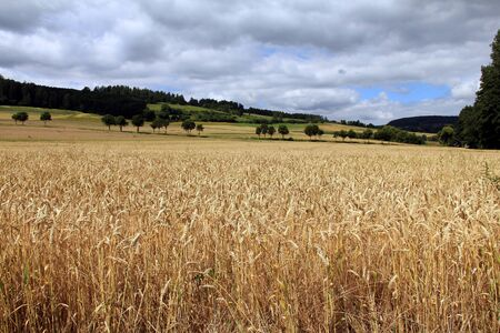 Beautiful golden wheat field country landscape photo
