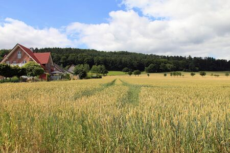 Wheat field landscape with country house in the middle ground Stock Photo - 16442857