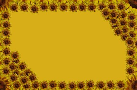 Sunflowers abstract frame photo
