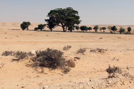negev: Negev desert