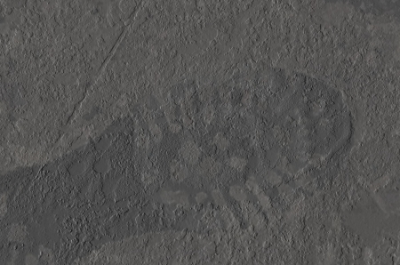 Gray wall grunge background with footprint photo