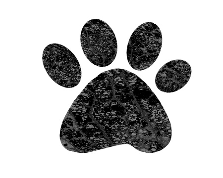 Paw print on white background photo