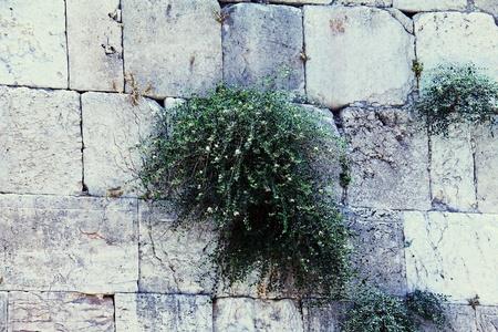 Western Wall, Jerusalem , Israel photo