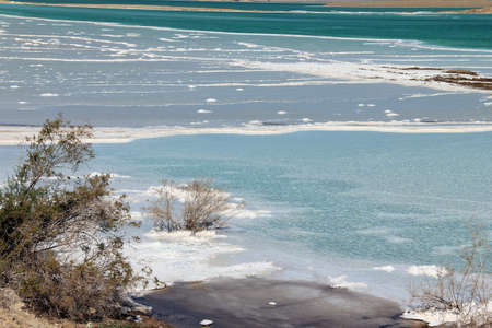 A dead bush lying covered with salt in the Dead Sea, Israel photo