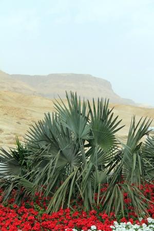 judean hills: Palm trees on the  Judean Hills background