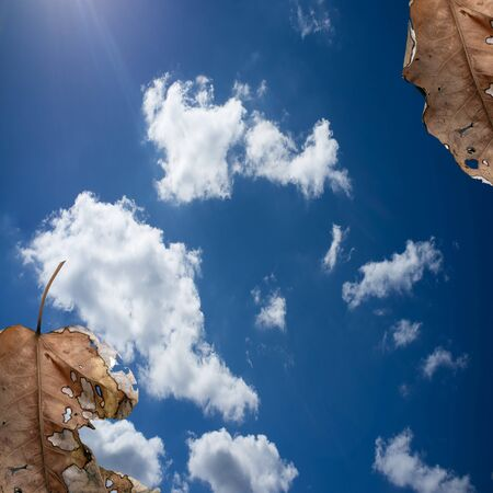 changing form: autumn leaves on blue sky  Stock Photo