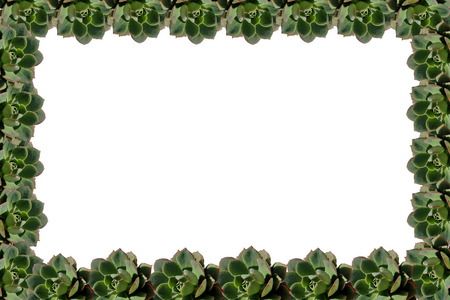 Succulent Plant Frame Isolated On White Background Stock Photo ...