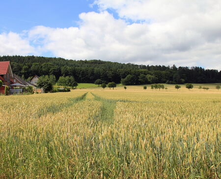 Wheat field landscape with country house in the middle ground photo