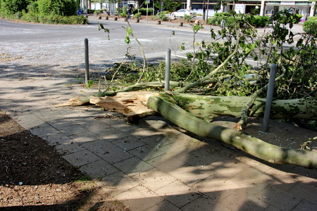 high winds:  Fallen branch of tree  blown over by heavy winds  on the pavement  Deadly summer storms hit western Germany after a heat wave  High winds, thunder and lightning and heavy rains disrupted air traffic, public transport and the roads  Dusseldorf, Germany Stock Photo
