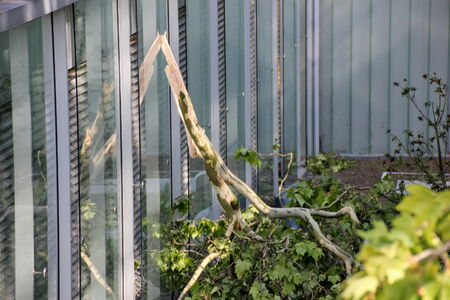 high winds:  Fallen branch of tree  blown over by heavy winds  on the balcony of apprartment house  Deadly summer storms hit western Germany after a heat wave  High winds, thunder and lightning and heavy rains disrupted air traffic, public transport and the roads  Du