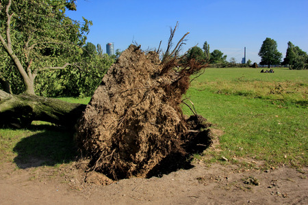 high winds:  Fallen  tree  blown over by heavy winds  at the park  Deadly summer storms hit western Germany after a heat wave  High winds, thunder and lightning and heavy rains disrupted air traffic, public transport and the roads  Dusseldorf, Germany