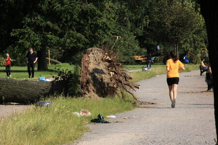 high winds:  Group of people at the park near  fallen tree blown over by heavy winds on June 2014  in D�sseldorf, Germany  Deadly summer storms hit western Germany after a heat wave  High winds, thunder and lightning and heavy rains disrupted air traffic, public tran