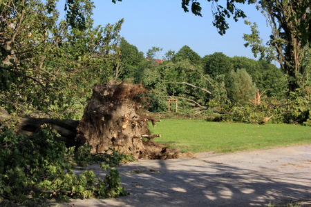 high winds:  Fallen  trees  blown over by heavy winds  at the park  Deadly summer storms hit western Germany after a heat wave  High winds, thunder and lightning and heavy rains disrupted air traffic, public transport and the roads  Dusseldorf, Germany