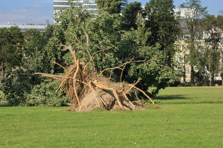 Fallen  tree  blown over by heavy winds  at the park  Deadly summer storms hit western Germany after a heat wave  High winds, thunder and lightning and heavy rains disrupted air traffic, public transport and the roads  Dusseldorf, Germany photo