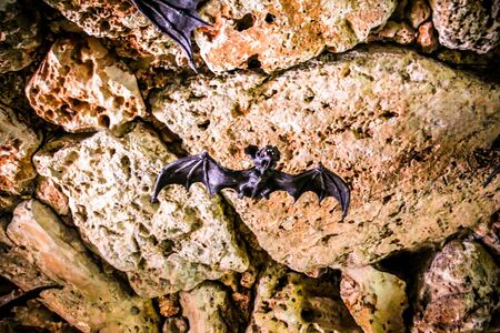 echolocation: Bats in layout  of the  stone  cave in the park Utopia