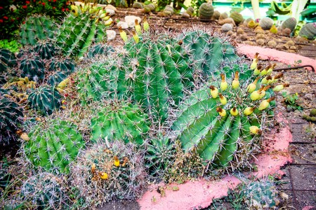 utopia: Different kinds of cactus in the Utopia orchid  park   in Bahan . Israel