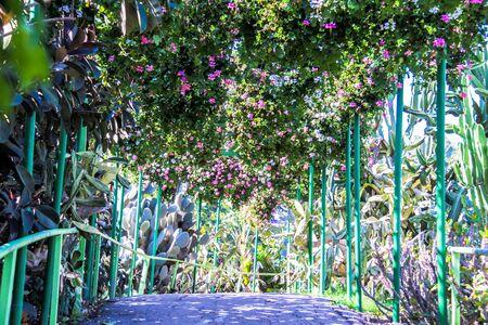 utopia: Walkway  in the Utopia park. Bat-Hafar, Israel