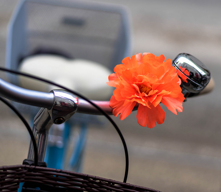 Bicycle handlebars decorated with red flower with selective focus showing saddle and wheel in the background with space for your design