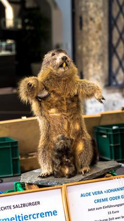 Salzburg, Austria - July 15,2017: Beaver stuffed like advertising in a perfume shop
