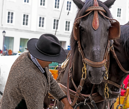 Salzburg, Austria - July 15, 2017: The cabby correcting the harness on his horse. Selective focus Foto de archivo - 95023259