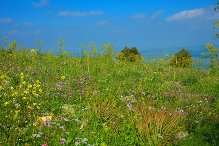 Beautiful scenic view at top of mountain with blossoming field of different flowers in spring